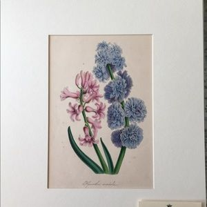 RARE 1800s Plate Press Botanical Print Purples